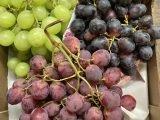 XL Seedless Italian Grapes (2.5kg)