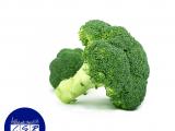 Large Broccoli Head x2