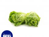 Gem Lettuce x2